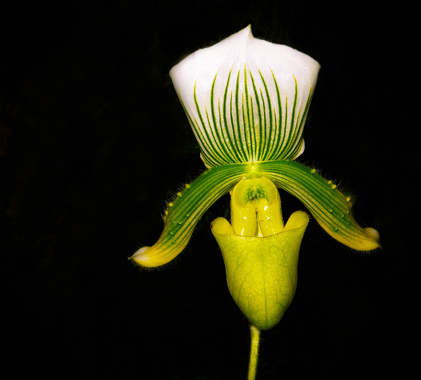 CCC037_Orchid