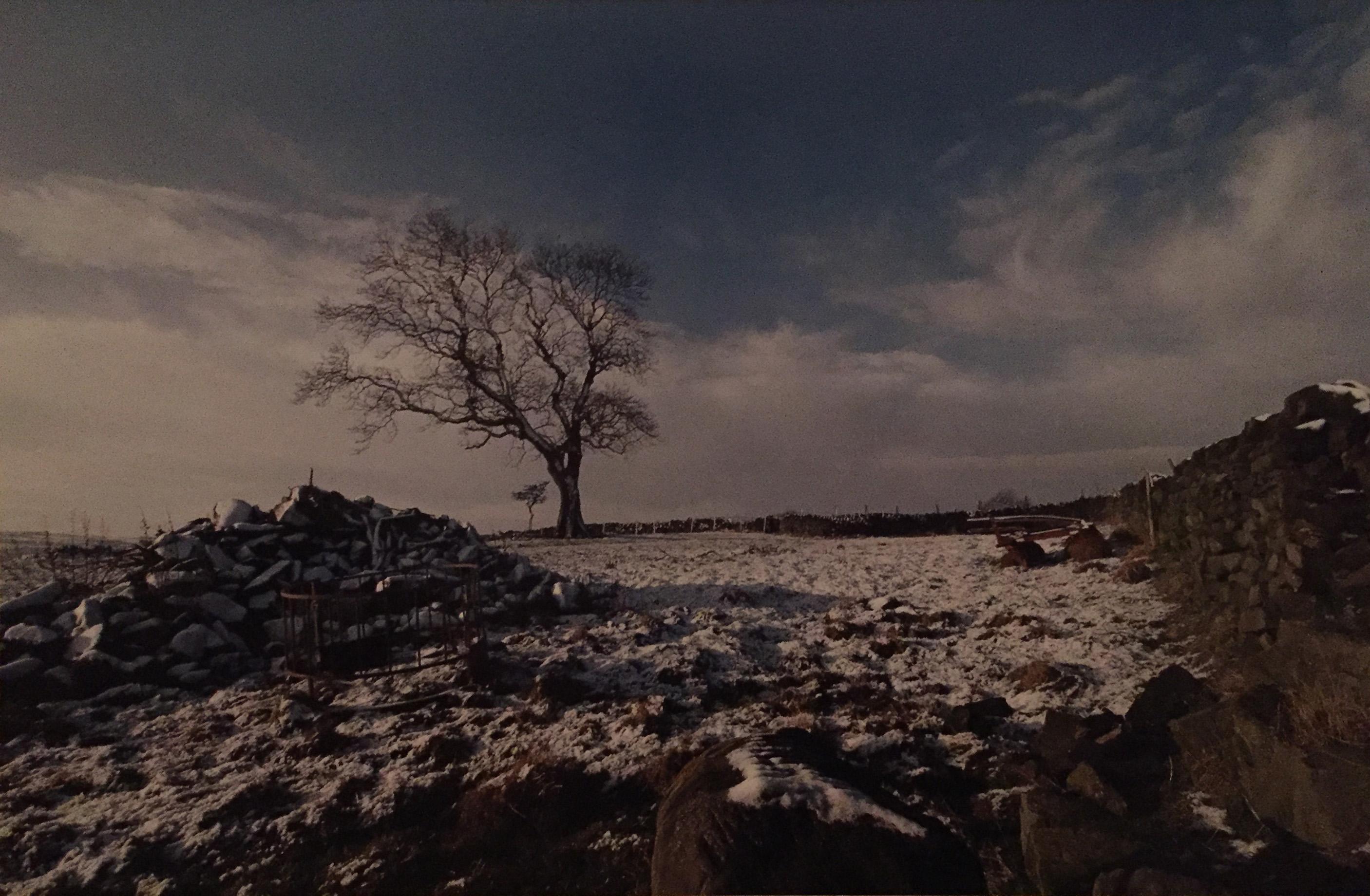 CCC006-Snowy Field