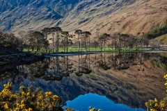 CCC037-Buttermere Pines