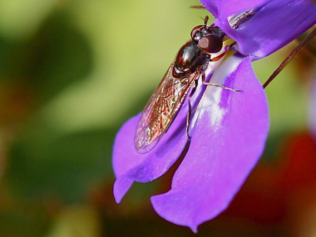 Mmm...Nectar
